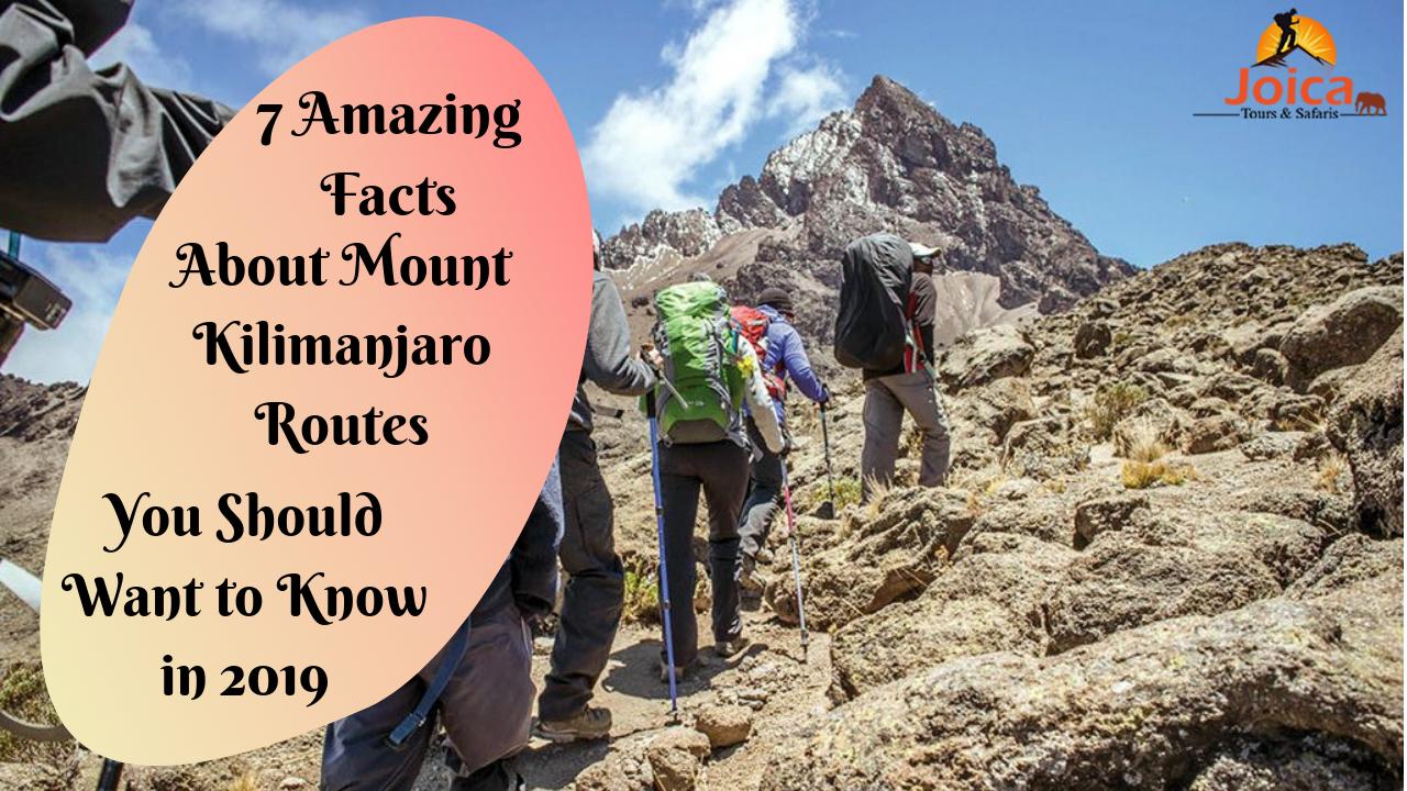 7 Amazing Facts Of Kilimanjaro