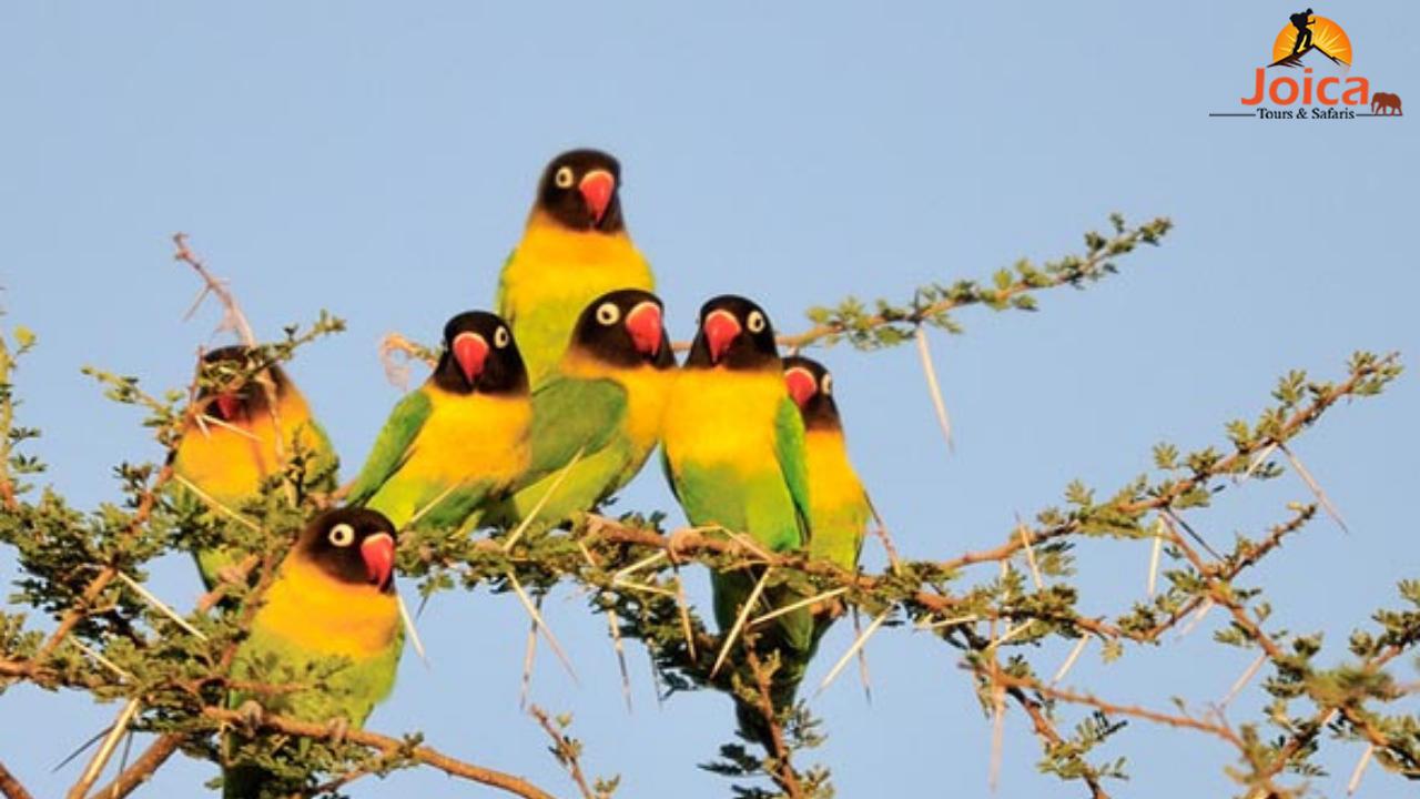 See The Amazing Birdlife