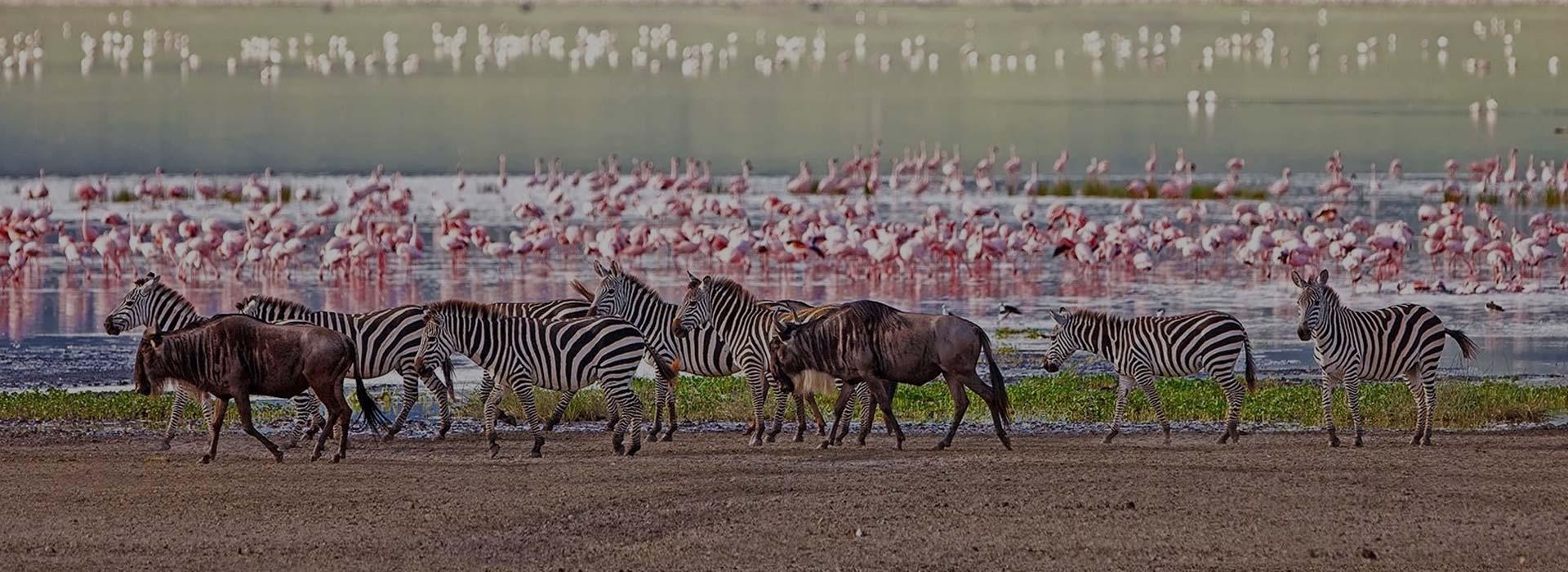 Lake Manyara Day Trip