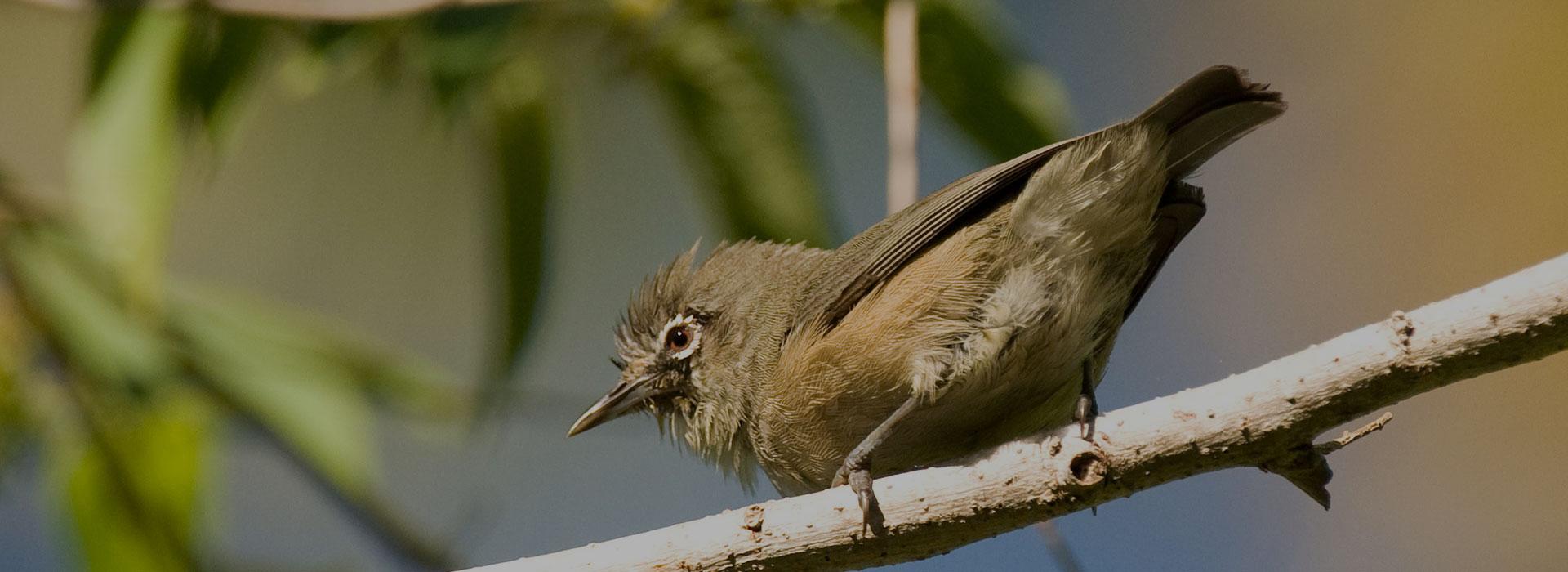 8 Days Tanzania Birding Safari