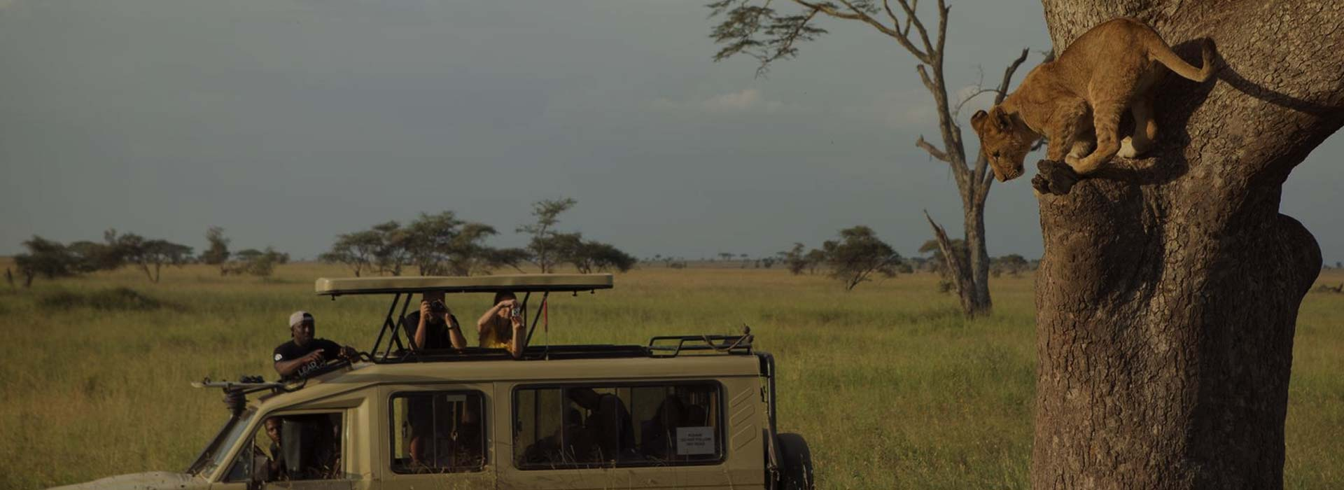 How To Go Tanzania Safari