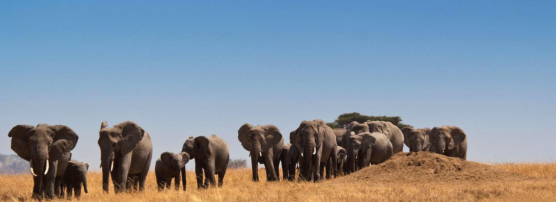 Tanzania Safari Checklist