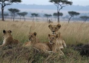 Tanzania Combined Tour