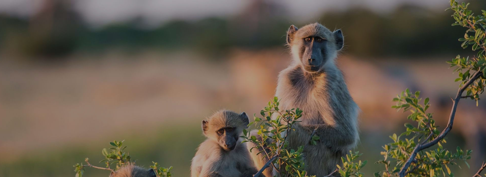 Tipping On Tanzania Safari